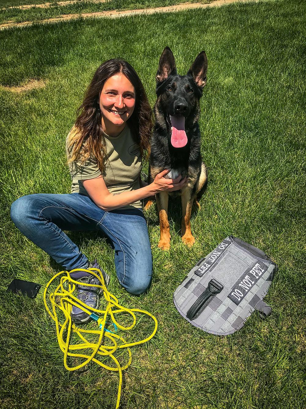 tracking dog, german shepherd