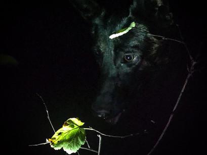 Night Blood Tracking