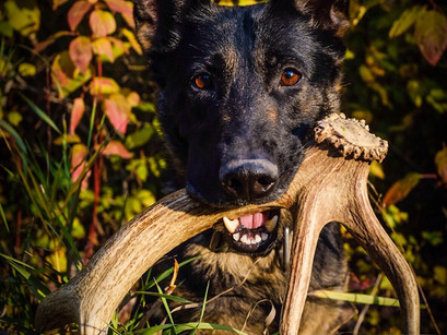 Shed Hunting in Fall Colors