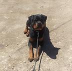 Dog training, Run Your Pack, Missoula Montana
