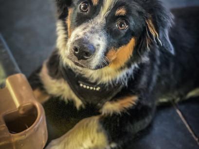 Puppy Marley