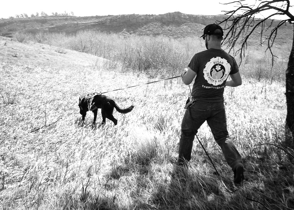 tracking dog, search and rescue, manhunting