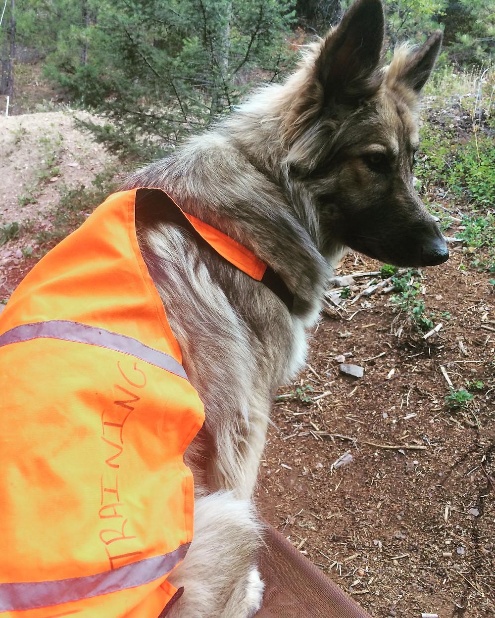 Dog training missoula montana