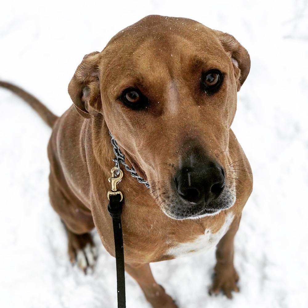 dog training missoula, hound dog, dog trainer missoula montana