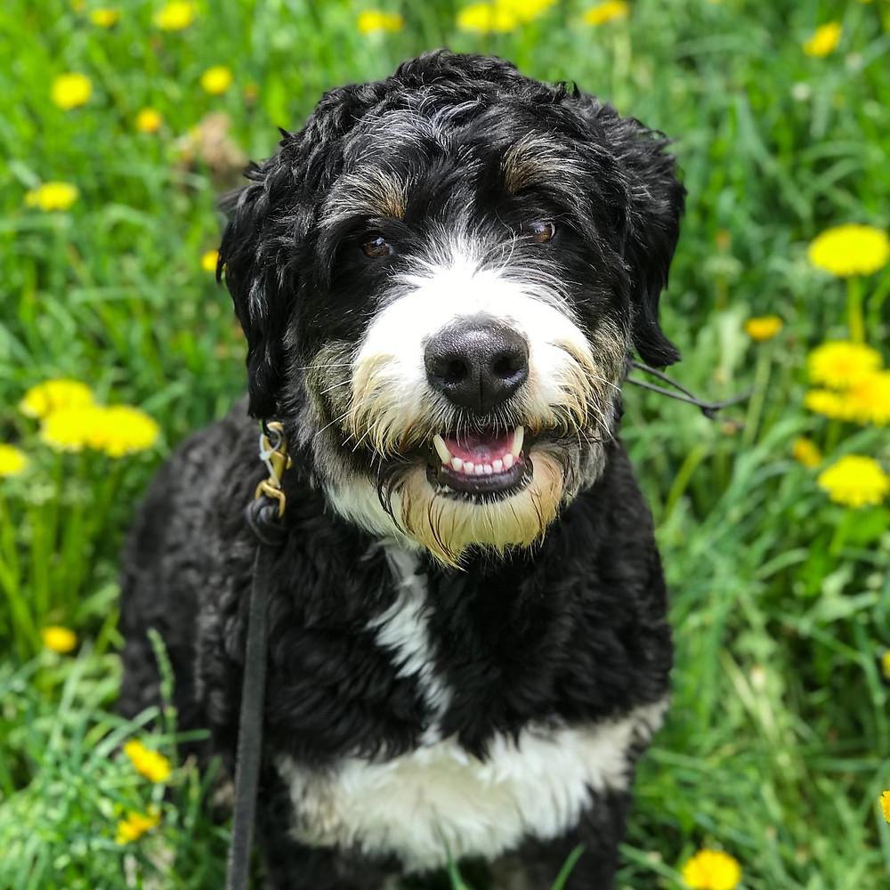 dog training missoula