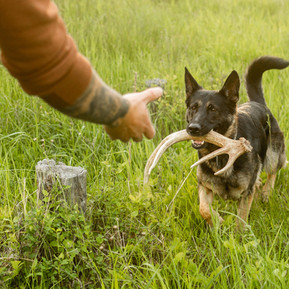 ONLINE SHED HUNT COURSE NOW AVAILABLE