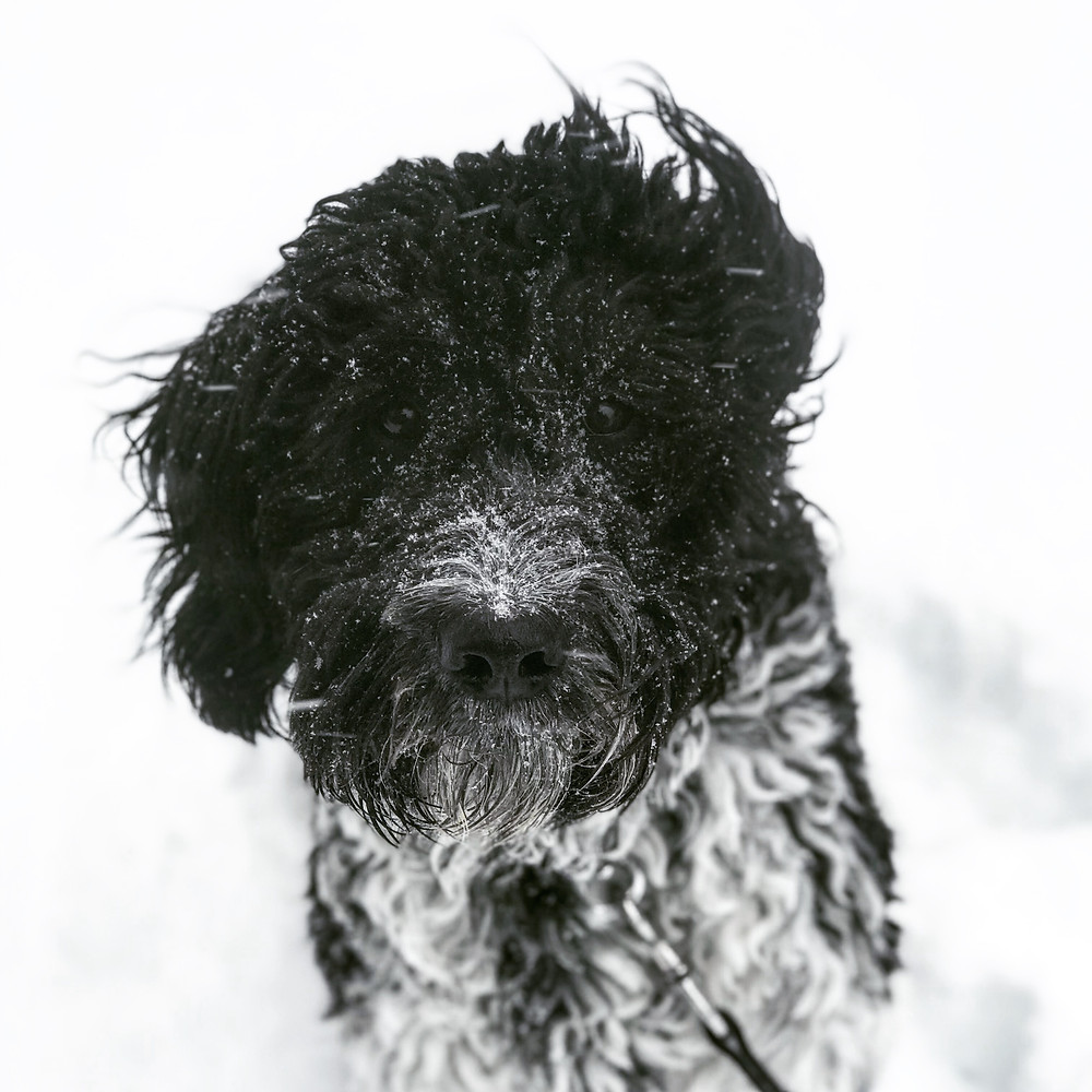 german shepherd, dog training missoula, dog trainer missoula montana