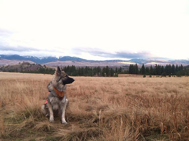 Dog Training, Run Your Pack, Missoula Montana