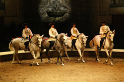 musée_cheval_3