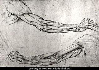 Study-of-arms.jpg