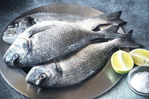 poissonnerie-écailler-traiteur- plateaux de fruits de mer- huîtres- crustacés-la-passion du gout-daurades