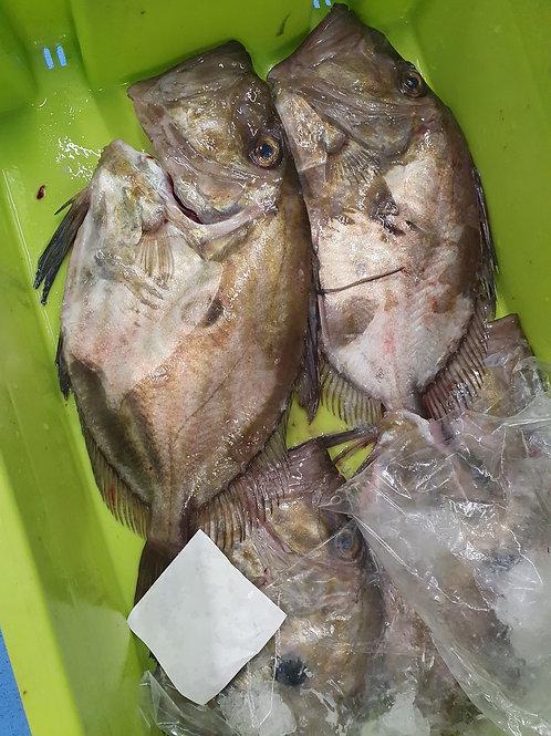 poissonnerie-écailler-traiteur- plateaux de fruits de mer- huîtres- crustacés-la-passion-du-gout-saint-pierre