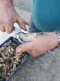 Huîtres Spéciales Marennes Oléron