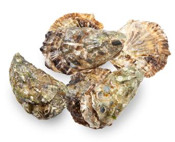 La nouvelle saison des huîtres de Zélande est arrivée !