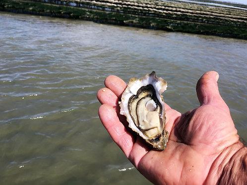 poissonnerie-écailler-traiteur- plateaux de fruits de mer- huîtres- crustacés-la-passion du gout-huîtres-marennes oléron