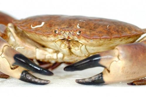 poissonnerie-écailler-traiteur- plateaux de fruits de mer- huîtres- crustacés-la passion du gout-tourteaux