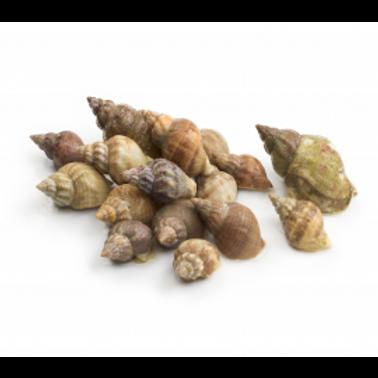 poissonnerie-écailler-traiteur- plateaux de fruits de mer- huîtres- crustacés-la passion du gout-bulots