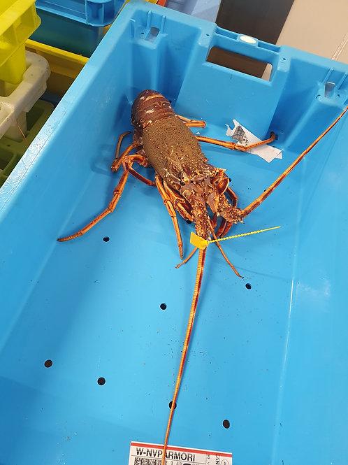 poissonnerie-écailler-traiteur- plateaux de fruits de mer- huîtres- crustacés-la passion du gout-langouste