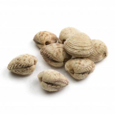 poissonnerie-écailler-traiteur- plateaux de fruits de mer- huîtres- crustacés-la passion du gout-praires