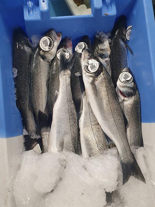 poissonnerie-écailler-traiteur- plateaux de fruits de mer- huîtres- crustacés-la-passion du gout-bar de ligne