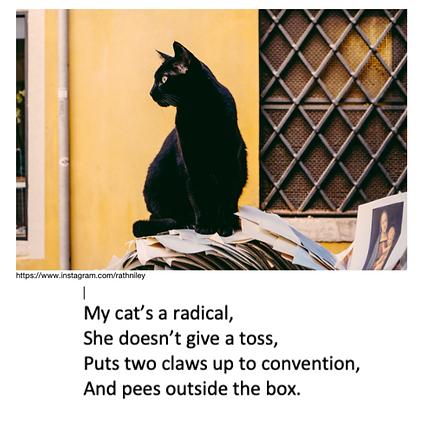 Radical cat instagram_edited_edited.png