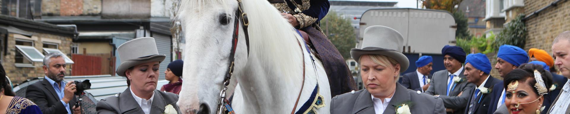 Asain Wedding Horse