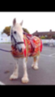 Asia Wedding Horse
