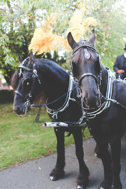 Black Friesians