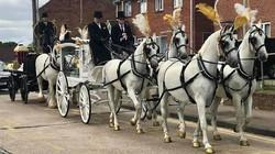 four horse team