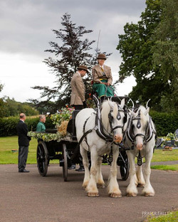 shire horse country carriage