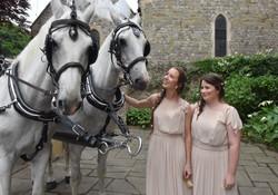 White Carriage Horses