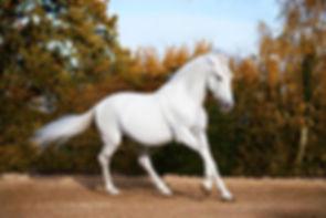 White Horse Farm Equine Models