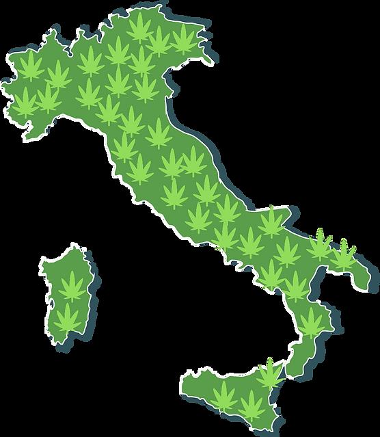 cbd thc maria marijuana gangia infiorescenza canapa canapa light haze cannabis