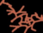 Logo R02-19.png
