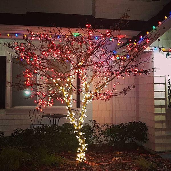 Christmas lights surrey tree wrap