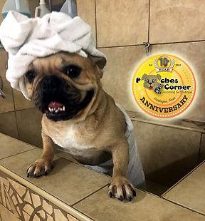 Dog Bathing_edited.jpg
