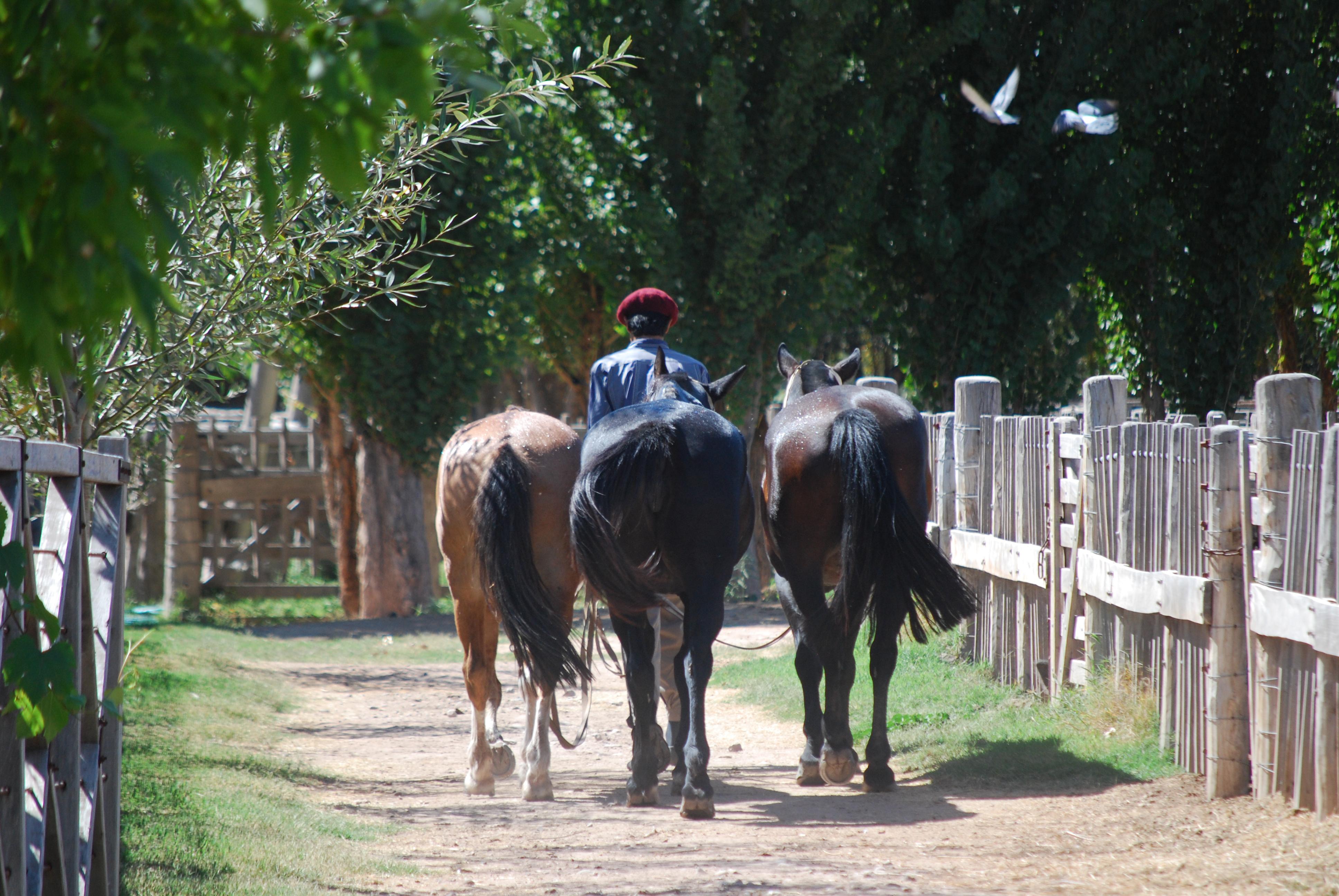 Argentina horse back riding