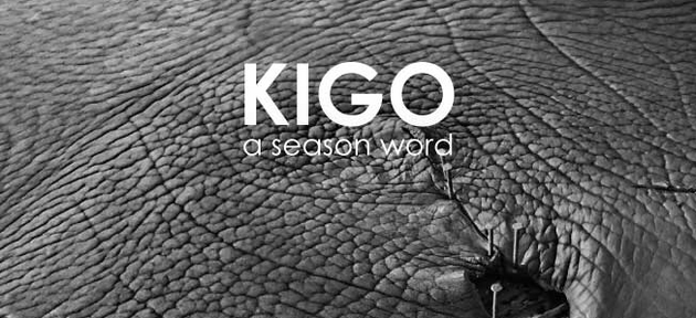 KIGO's A/W collection in rooms !!