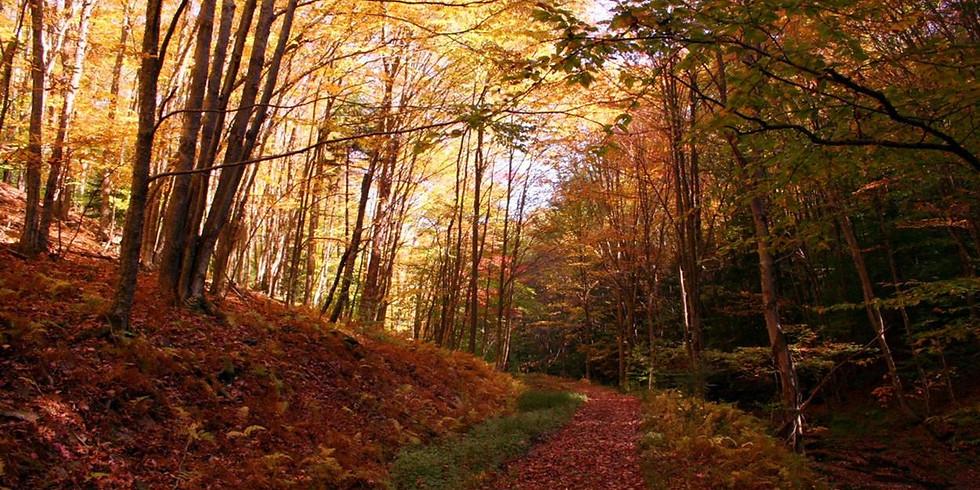 Fall Color & Tree Identification Hike