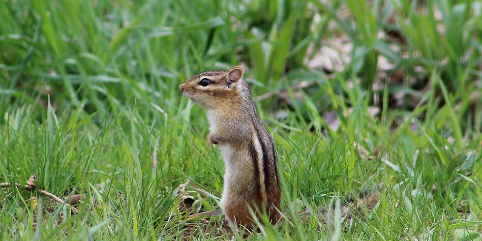 PM Session: Storytime: Squirrels & Chipmunks