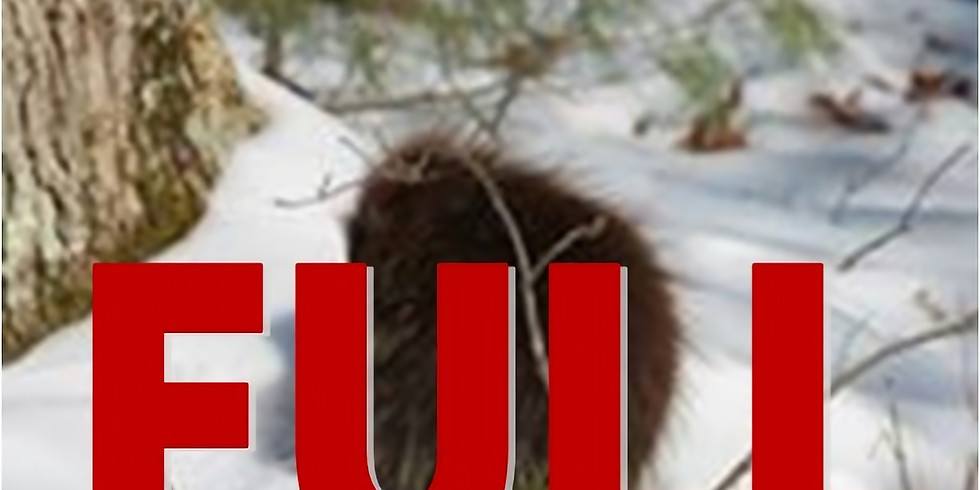 Porcupine Snowshoe Hike  #1