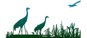 cranes on wetland clipart.png