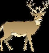 deer clipart.png