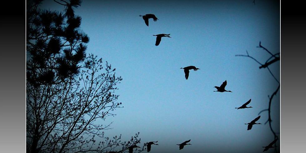 Night with the Sandhill Crane
