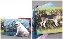 dogs card-01