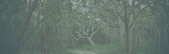 A foggy copse of gnarled trees creates the background for a quote on wildnerness.