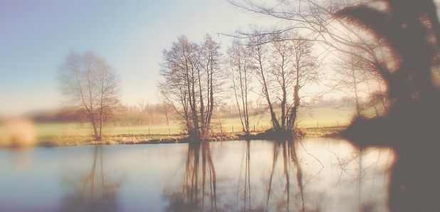Pastoral image of a pond edged with clusters of tall trees. Landscape warmly lit with field beyond.