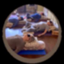 Beginner Yoga Classes in Toronto, Beginner Yoga