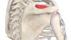 TRIGGER POINT OF THE WEEK – SUPRASPINATUS