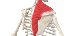 TRIGGER POINT OF THE WEEK – TRAPEZIUS